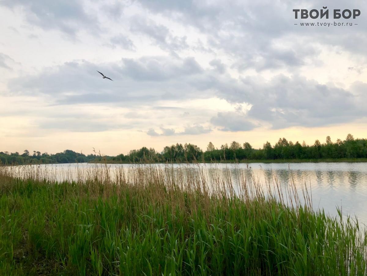 композицию ярких фото озеро юрасовское г бор нижегородской области домике две раздельные