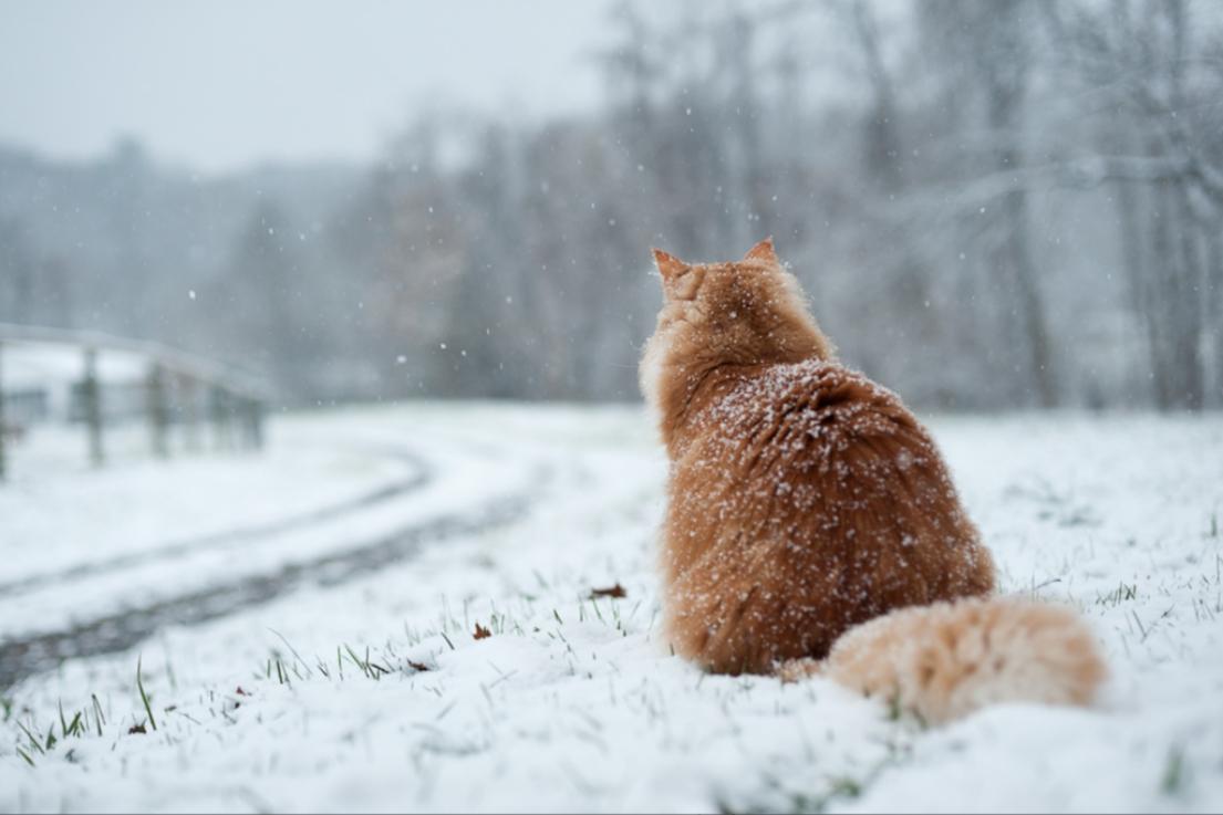 С последним снегом картинки